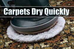 Pattison Rug Cleaning Services